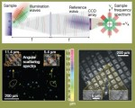 Digital Fourier holography enables wide-field, superresolved, microscopic characterization