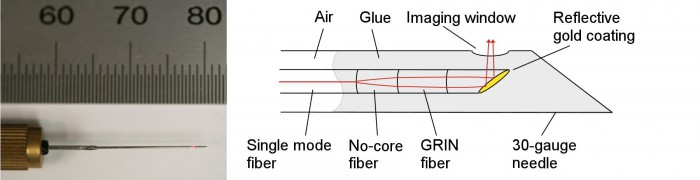 Fig. 2. (left) 30-gauge needle probe. The outer diameter of the needle probe is 310 micrometers. (right) Schematic of the needle probe with reflective gold coating.
