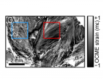 Three-dimensional optical coherence micro-elastography of skeletal muscle tissue