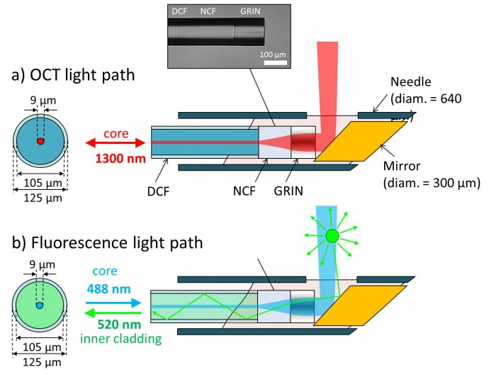 Illustration of our combined OCT + fluorescence imaging needle probe using double-clad fibre (DCF). (a) shows the OCT light path. The 1300-nm light from the OCT system is guided in the core of the DCF and expanded/focused by sections of no-core fibre (NCF) and graded-index fibre (GRIN). (b) shows the fluorescence light path. The 488-nm light for fluorescence excitation is guided in the core of the DCF and is focused into the sample via the same path as the OCT light. The green fluorescence, however, is efficiently collected and guided back to the detector by the large-diameter inner cladding.