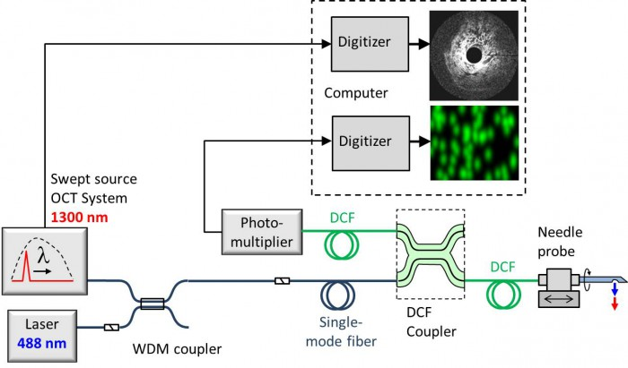 Schematic of our all-fibre system for combined OCT and fluorescence imaging using needle probes