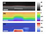 Quantitative Compression Optical Coherence Elastography as an Inverse Elasticity Problem